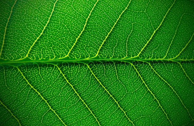 你知道为什么自然界的植物是绿色的呢?