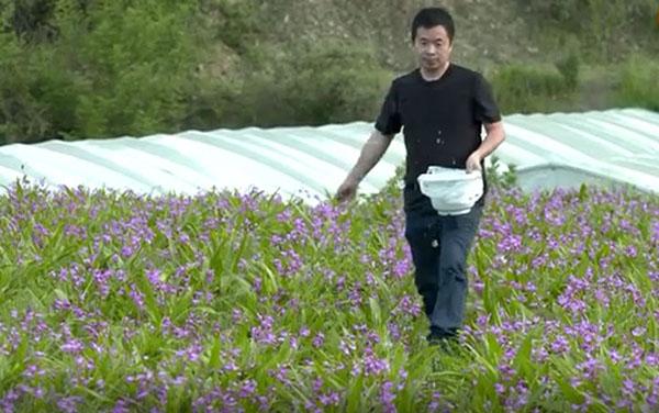 农村种植种什么?当然是云南耘禾智慧农业发展有限公司的白芨、重楼、黄精、金线莲种植,把握中草药种植风口